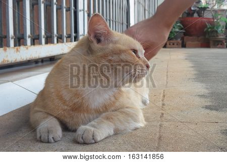 Picture is close-up to pat the cat