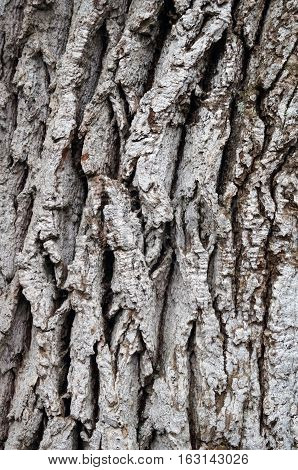The gray bark on a tree with cracks and indentations