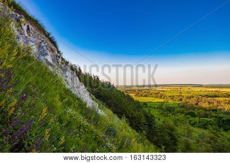 The steep of the chalk mountain overlooking the green valley. Relic pine trees on a slope.
