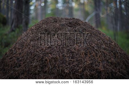 A karge anthill with an out of focus background