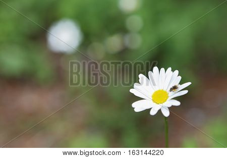 Stabilization of white flower in green garden. Natural Life Concept