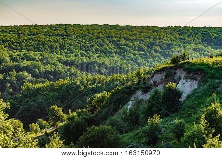 Forest on the chalk hills. Summer landscape from a height.
