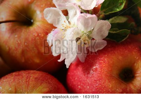 poster of Apples and apple-tree flowers on a beige background