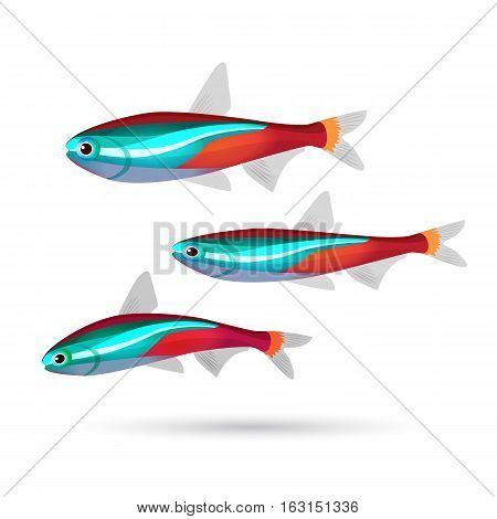 Tropical aquarium fish on white background. Set of three colorful fish of blue, gray, red and white colors. Neon. Cartoon marine inhabitants. Bright aquarium characters. Underwater animals. Vector