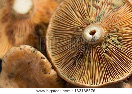 Mushrooms Photographed Close Up
