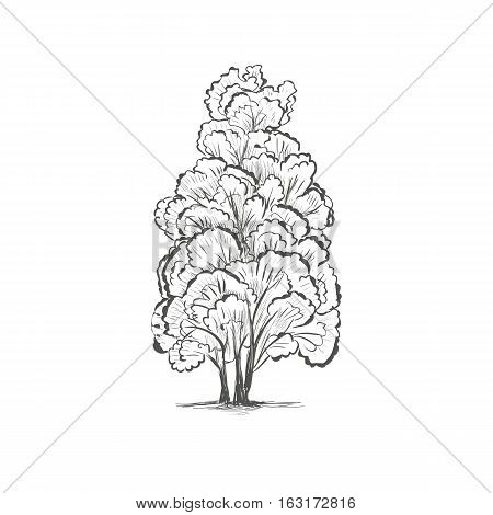 Tree Sketch. Silhouette of a tree vector illustration EPS10