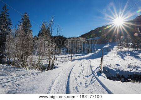 Pathway In Winter Wonderland On A Bright Sunny Day