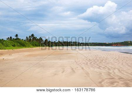 Green palms at empty beach in Weligama bay Sri Lanka