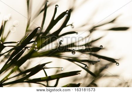 Dew drops on blades of grass in sun backlight