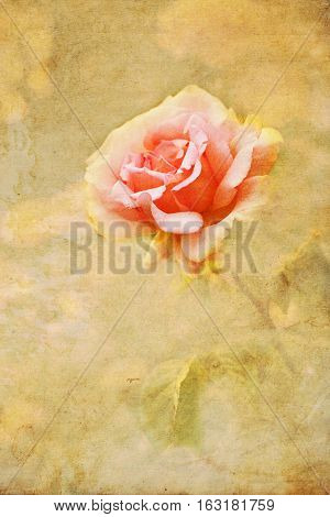 picture of a pink rose altered with vintage style texture