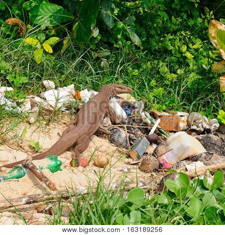 A giant lizard on a garbage dump