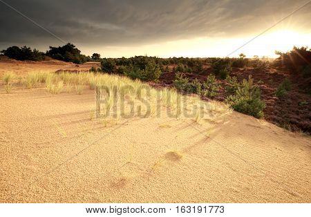 sunrise over sand dune and heathland Drenthe Netherlands