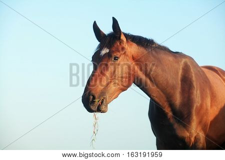 horse outdoors on summer  pasture close up