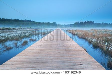 wooden road on misty swamp with cotton grass
