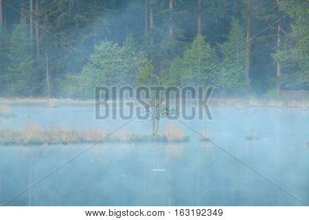 tree on misty swamp water in spring