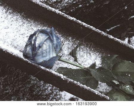 Синяя роза лежит на рельсе, припорошенной снегом - символ одиночества.