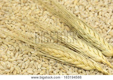 3 spikelets of wheat lying in the grain benefits fiber grain food crop diet
