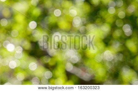 Green Natural Background Of Out Of Focus Forest