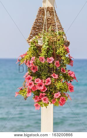 Pink petunia blooming flowers in a basket on a white pole with on the backround the blue see and blue sky