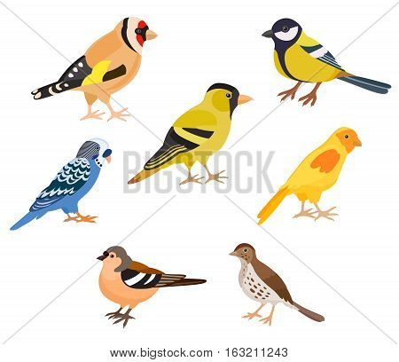 A set of colorful birds isolated vector illustration. Goldfinch thrush canary siskin tit finch budgie decorate cards or other design