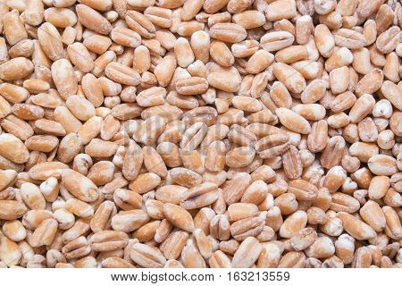 Wheat cereal grains background, backdrop or texture