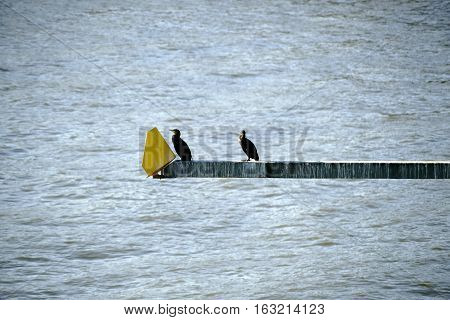 Two cormorants sit on a pole with a traffic signal at a bridge.
