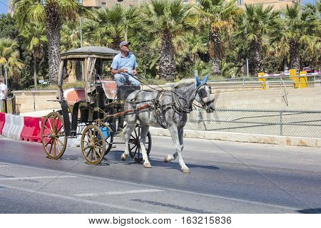 Horse Coach Rider In Valetta On A Public Street