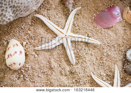 white sand sea star and shells on sand