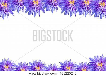 Lotus flower blossom isolate on white background