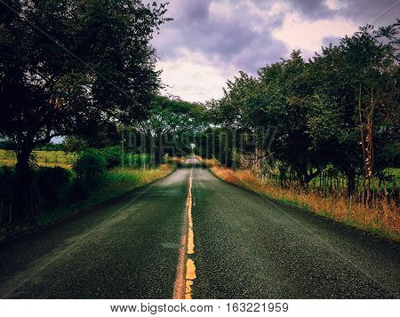 Lonely path between trees. Road without cars or people