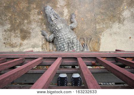 Crocodiles Resting At Crocodile Farm