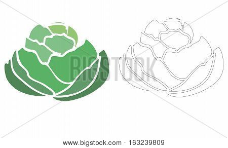 Cabbage vector illustration. Cabbage icon, logo, sign isolated on white background.