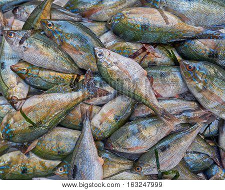 fresh sea porgies closeup at the local market
