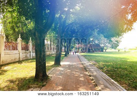Pathway and natural green park with sunlight background