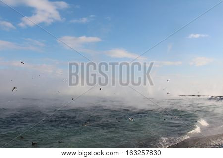 Black sea in cold winter with lots of birds around