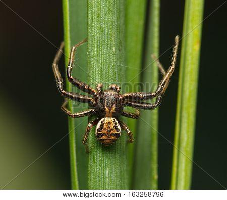 Spider On Grass