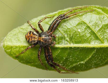 Spider Sprawl On Leaf