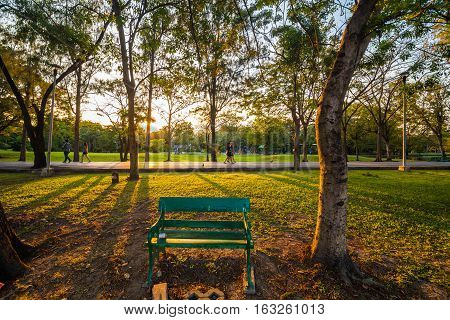 Park Bench Locate On Green Park With Tree Evening