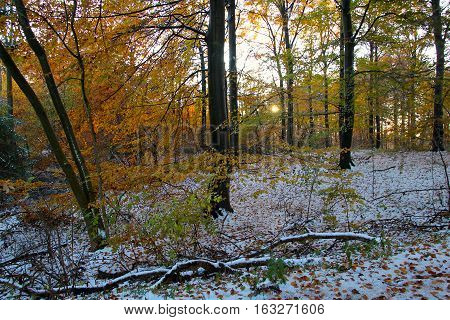 The forest in winter plumage in November