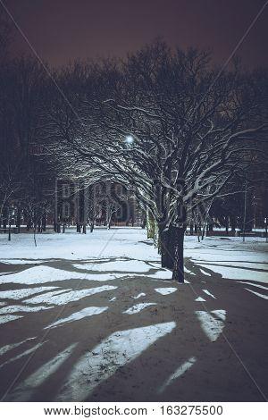 shadow of trees in nigth winter park