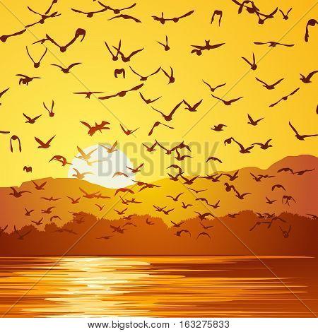 Square vector illustration flock of birds at sunset near coast.