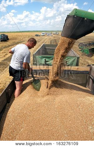 Kharkiv Ukraine - July 12 2011: Man level grain by shoveling when loading a truck from harvester in a sunny summer day in Kharkiv Oblast Ukraine on July 12 2011