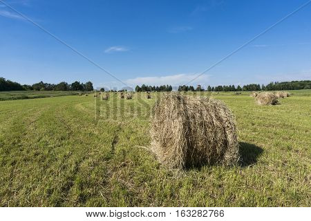 Rolling haystacks in countryside on sunny day