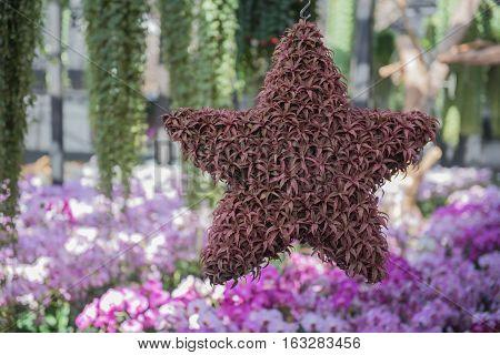 beautiful Ornamental star hanging in the garden.