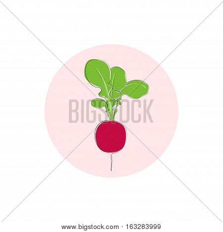 Icon radish, radish with leaves, icon vegetable with tops of vegetable