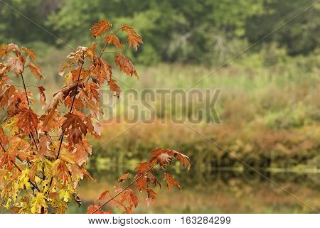 Colorful foliage bordering both banks of Blackstone River