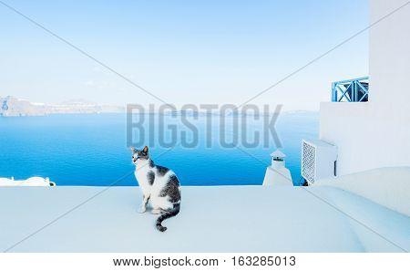 Cat against blue sky and sea in Santorini island Oia Greece