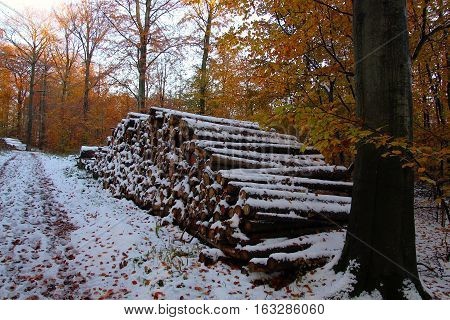 Firewood stack in the forest is almost at overthrowing