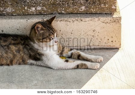 stray cat resting aside ancient column, athens, greece