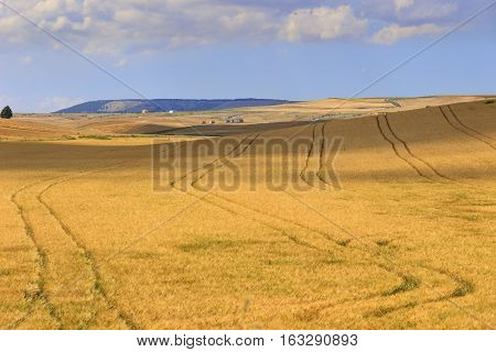 RURAL LANDSCAPE SUMMER Between Apulia and Basilicata: countryside with cornfield shaded by clouds. ITALY. In the distance  farmhouses on a hill between fields of grain.